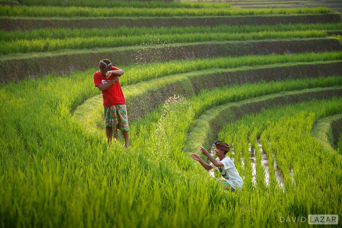 Rice-terraces-and-boys-playing-with-water