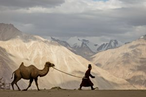 Ladakh-Tibetan-Nomad-Bactian Camel_India-Luminous-Journeys