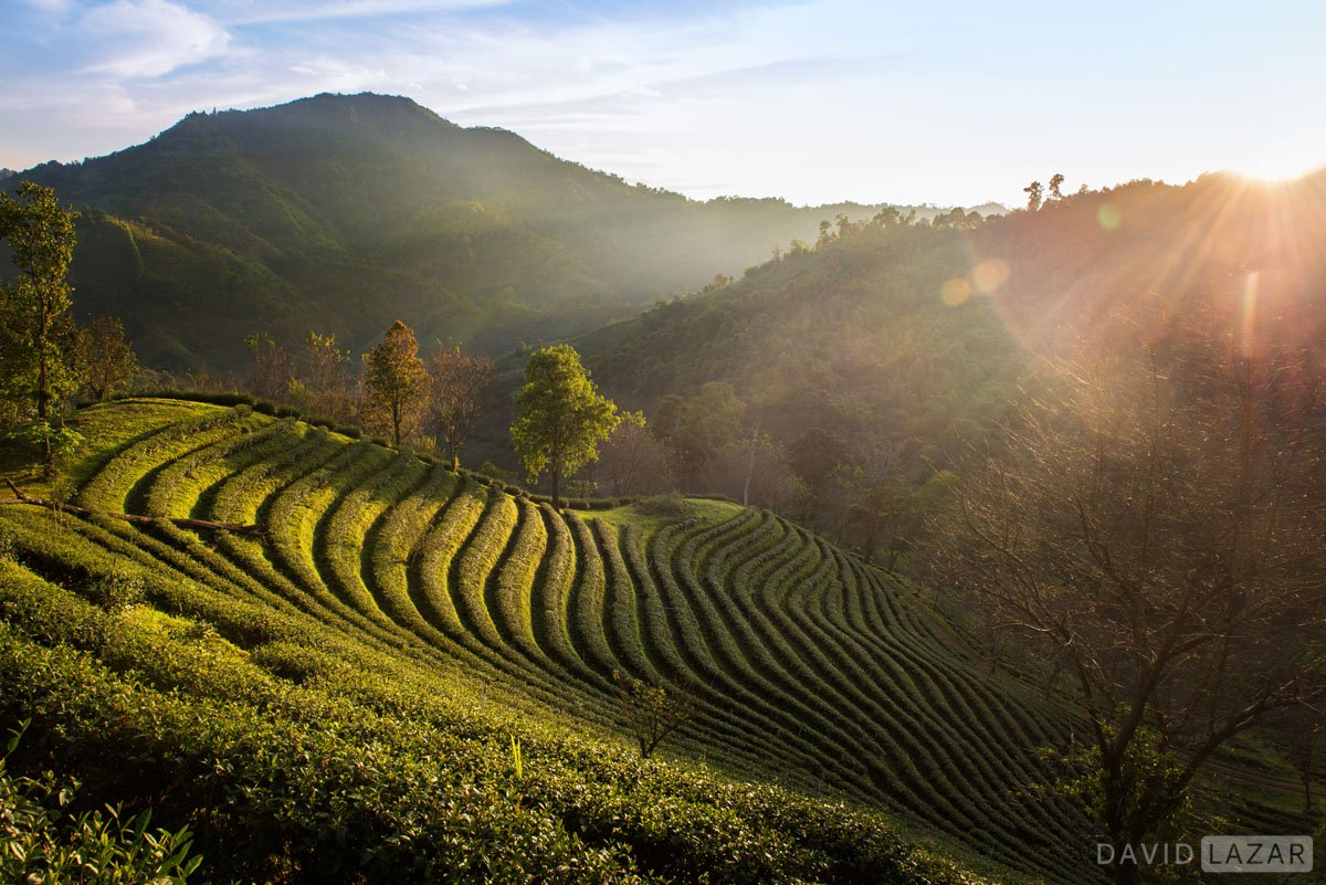 Off the beaten path sunset over mountain tea plantation in remote northern Thailand