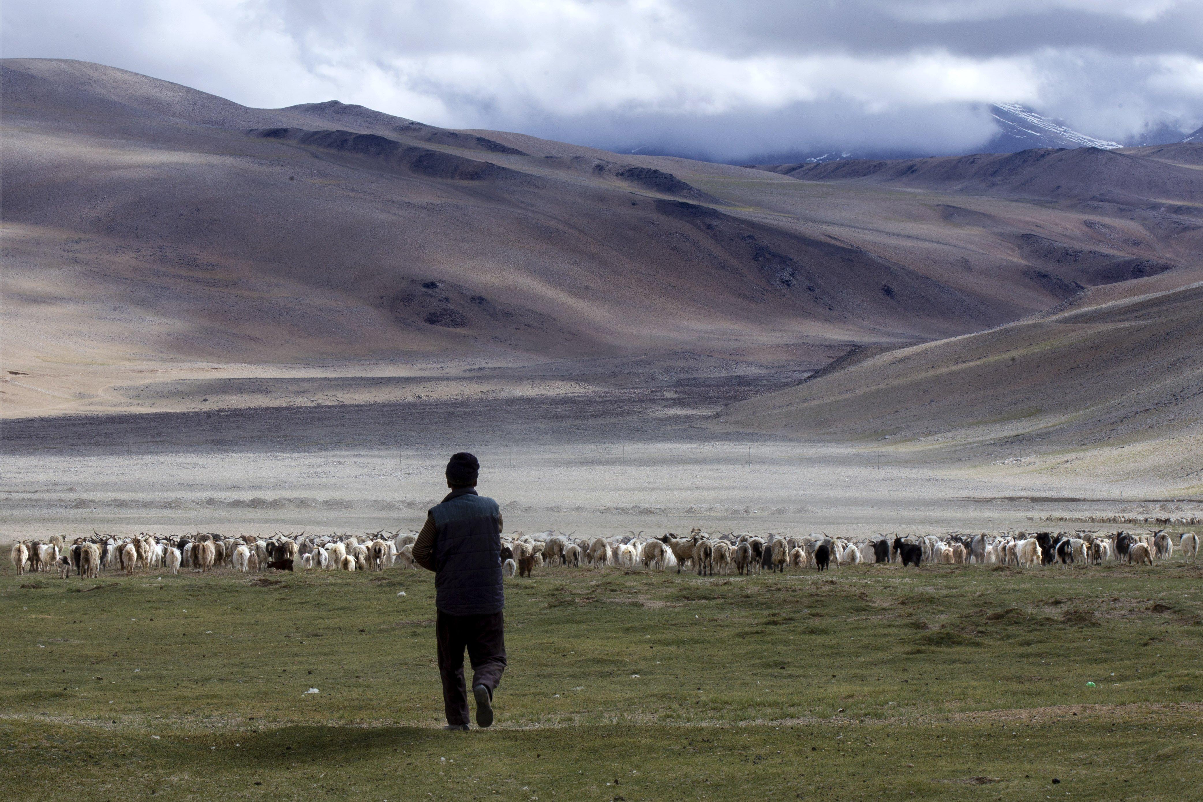 Nomadic-shepard-Ladakh
