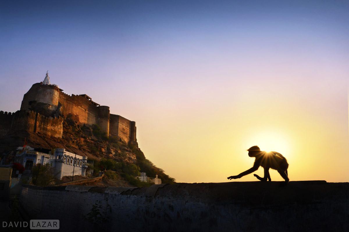 Monkey and fort, Jodhpur, India photo tour