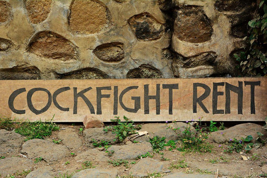 cockfight rentals