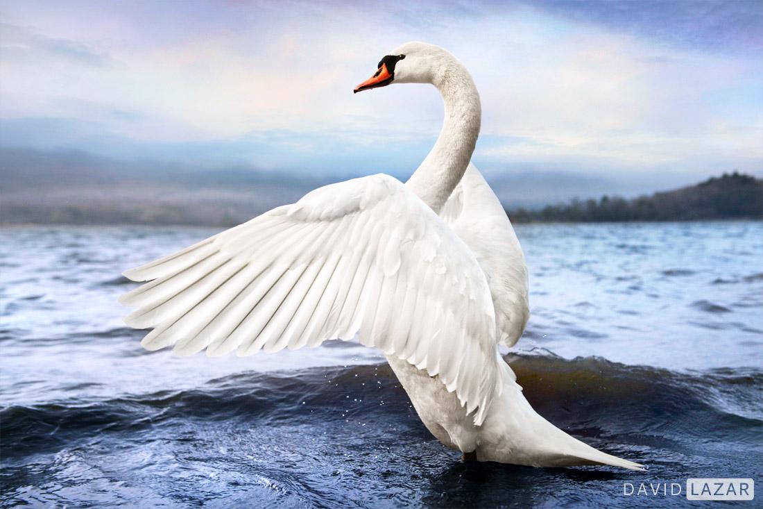 Swan Japan photo tour