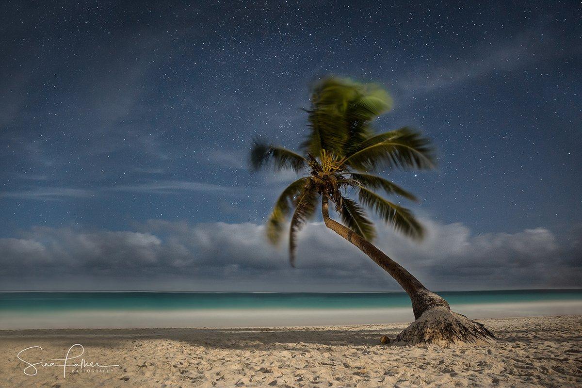 20.-palmera-boracha-playa-tulum-night-sina-falker-mexico.jpg